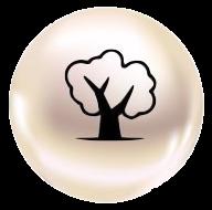 park pearl